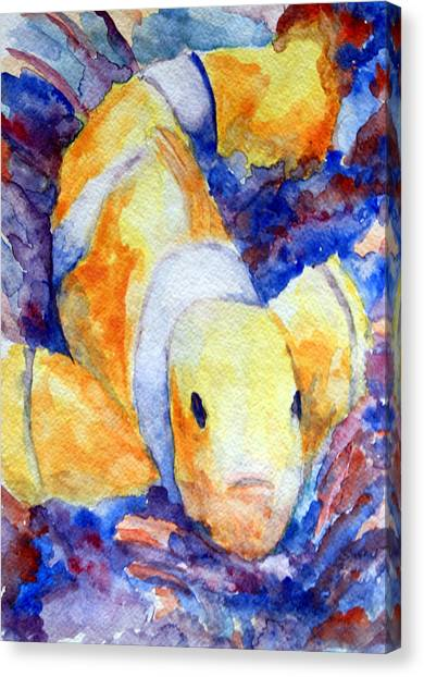 Clown Fish Canvas Print by Mike Segura
