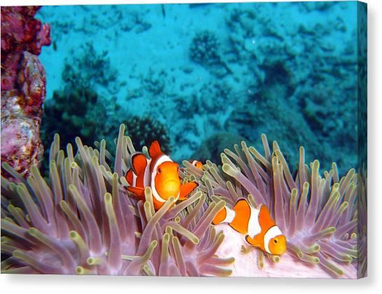 Coral Reefs Canvas Print - Clown Fishes by Takau99