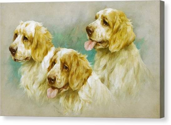 Purebred Canvas Print - Clumber Spaniels by Arthur Wardle
