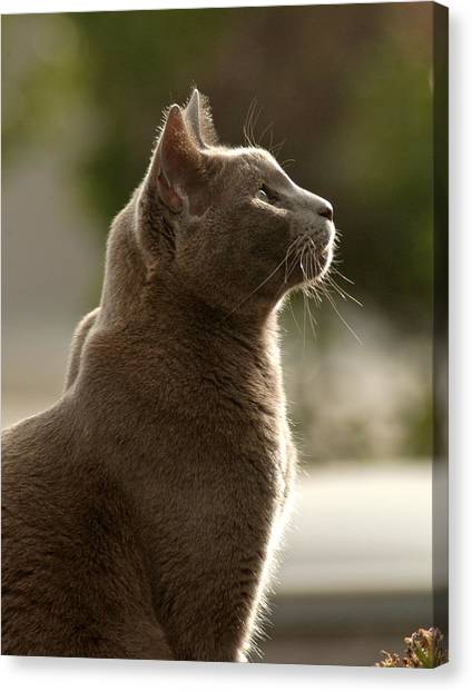 Clydes Profile Canvas Print by James Steele