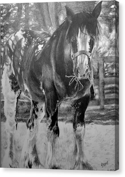 Clydesdale Canvas Print by Darcie Duranceau