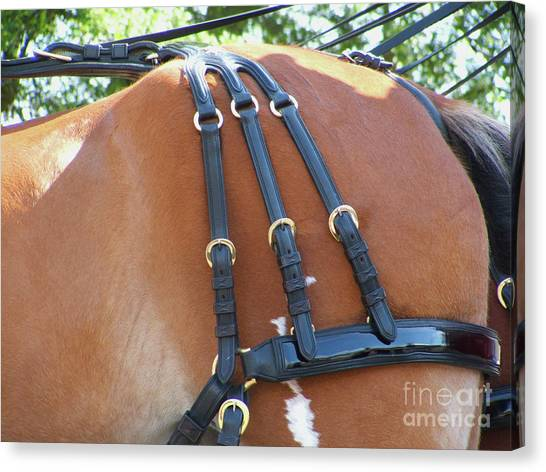 Clydesdale Tack Canvas Print
