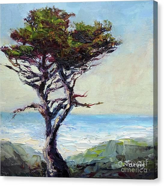 Coast Cypress Canvas Print