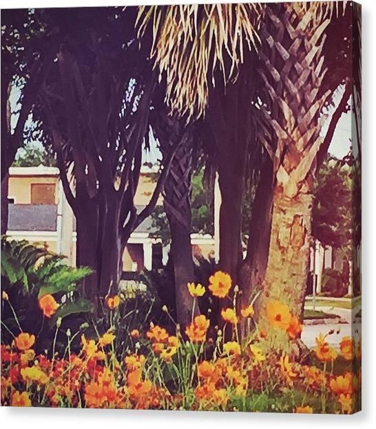 Orange Canvas Print - Coastal Beauty #art #msgulfcoast by Joan McCool