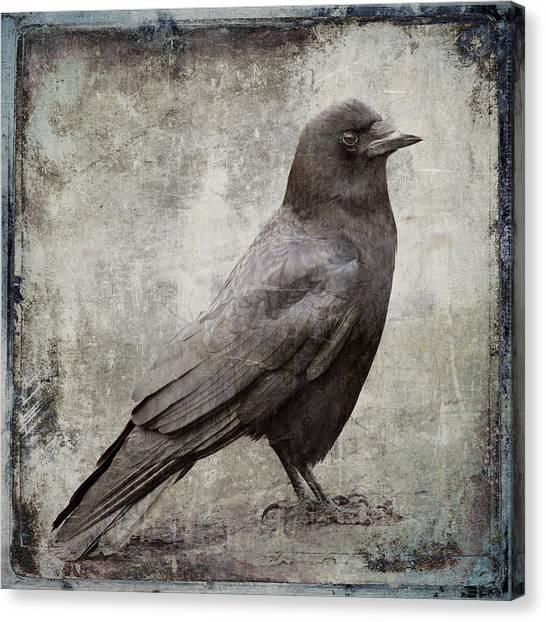 Blackbird Canvas Print - Coastal Crow by Carol Leigh