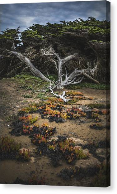Coastal Guardian Canvas Print