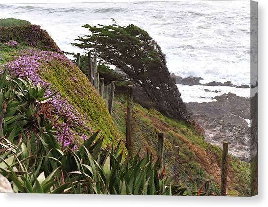 Coastal Windblown Trees Canvas Print