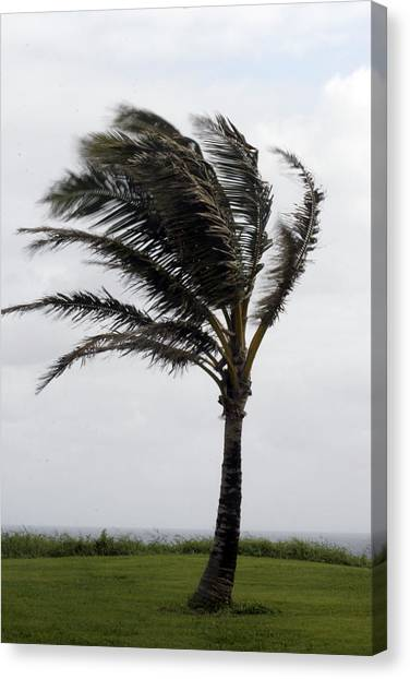 Coastal Winds Canvas Print