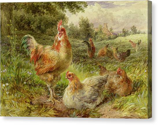 Fowl Canvas Print - Cochin China Fowls by George Hickin