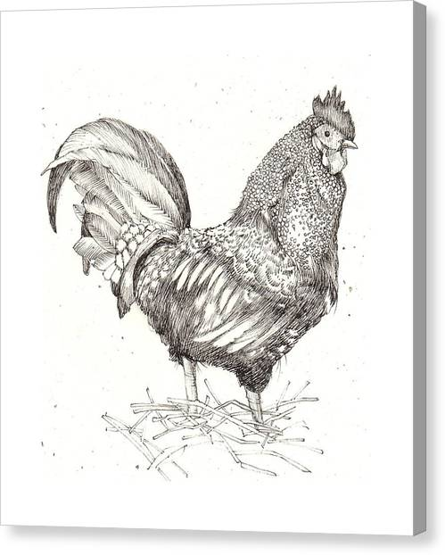Cock Of The Walk Canvas Print by Deborah Wetschensky