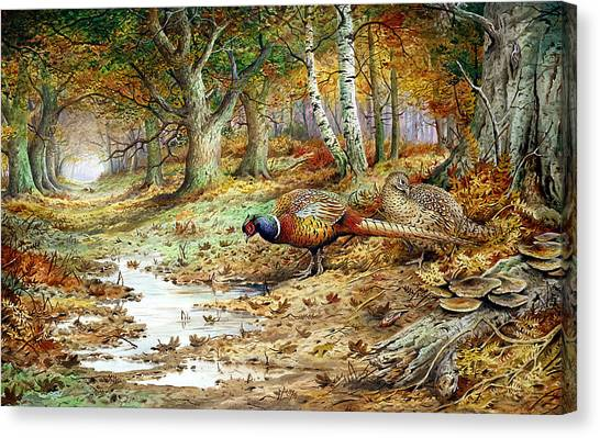 Pheasants Canvas Print - Cock Pheasant And Sulphur Tuft Fungi by Carl Donner