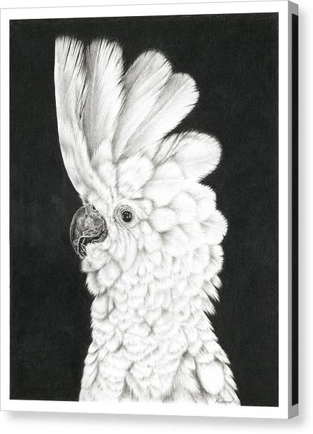 Cockatoo Canvas Print