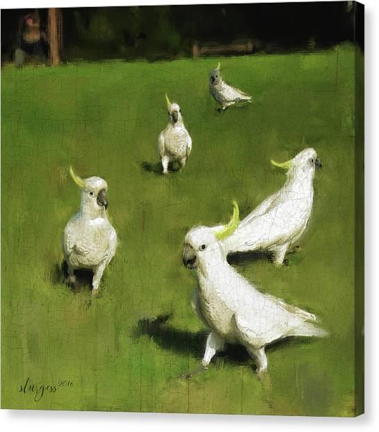 Cockatoo Canvas Print - Cockatoo  by Simon Sturge