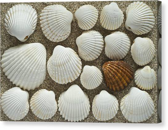 Cockles Collection Canvas Print by Igor Voljch