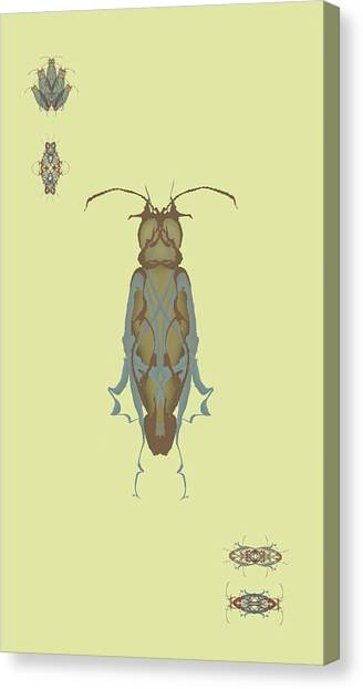Cockroach Specimen Canvas Print