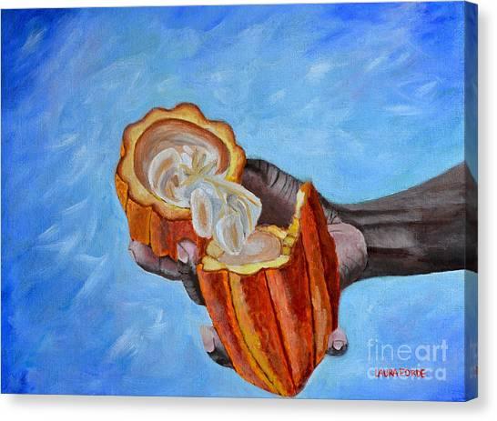 Cocoa Pod In Hand V2 Canvas Print