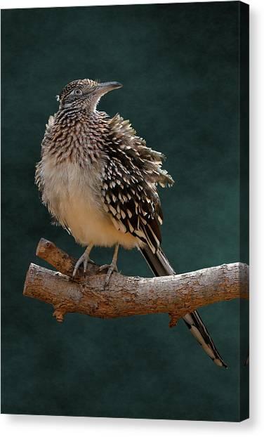 Cocoa Puffed Cuckoo Canvas Print