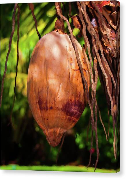 Coconut 2 Canvas Print