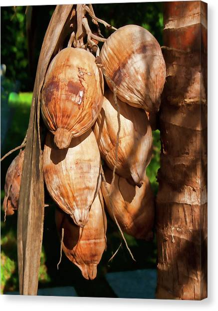 Coconut 3 Canvas Print