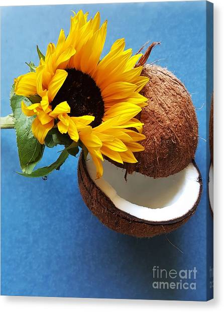 Coconut And Sunflower Harmony Canvas Print