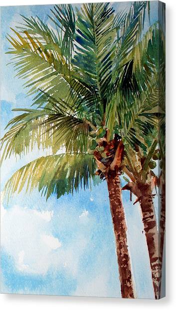 Coconut Palm Canvas Print by Peter Sit