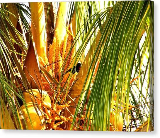 Coconut Tree Canvas Print by Glenda  Jones