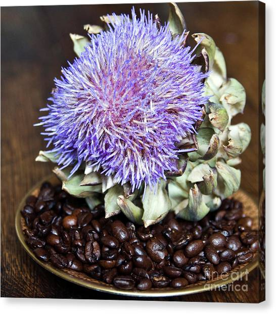 Coffee Beans And Blue Artichoke Canvas Print