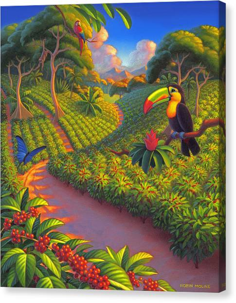 Toucan Canvas Print - Coffee Plantation by Robin Moline