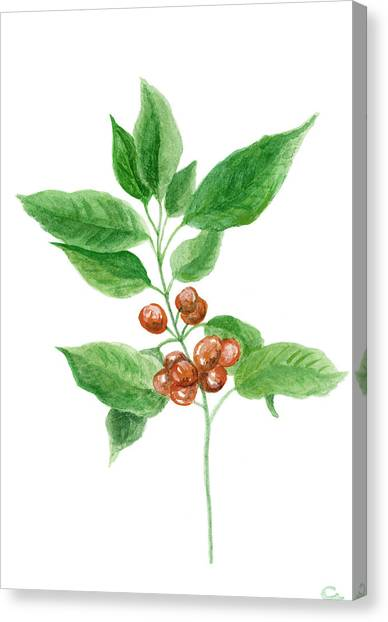 Coffee Plant Canvas Print - Coffee Watercolor Painting 1 by Green Palace