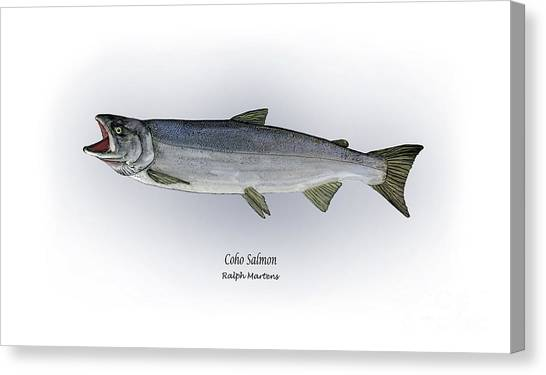 Angling Art Canvas Print - Coho Salmon by Ralph Martens