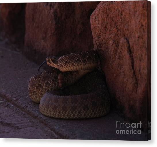 Poisonous Snakes Canvas Print - Coiled Rattler With Forked Tongue  by Jeff Swan