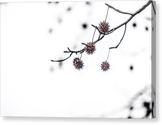 Cold And Pointy Canvas Print
