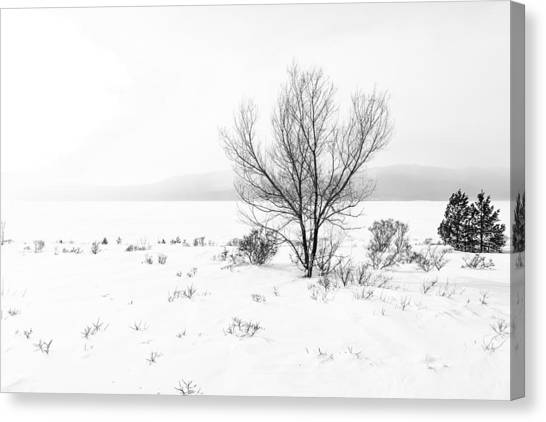 Cold Loneliness Canvas Print