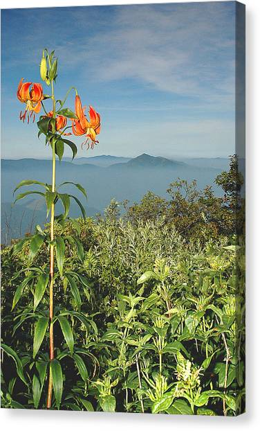 Cold Mtn. And Turk's Cap Lily Canvas Print by Alan Lenk