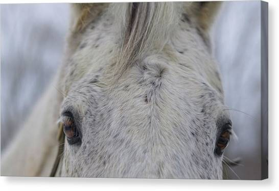 Cold Outside Canvas Print by JAMART Photography