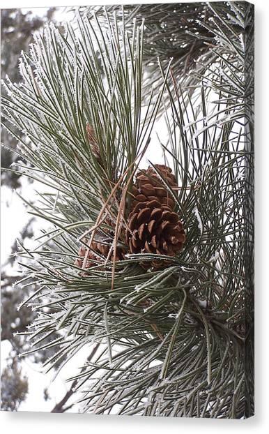 Cold Pine Canvas Print