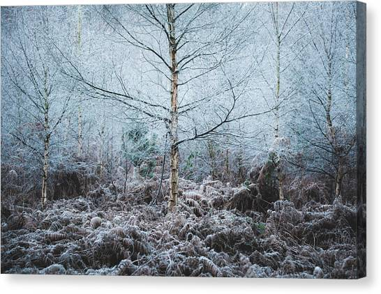 Sherwood Forest Canvas Print - Coldness by Chris Dale