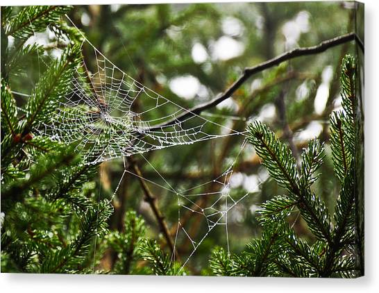 Collecting Raindrops Canvas Print