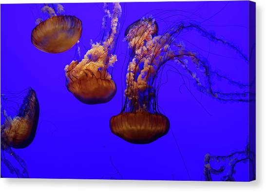 Collection Of Jellyfish Canvas Print