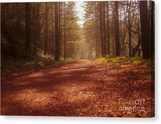 Colligan Autumn 2 Canvas Print