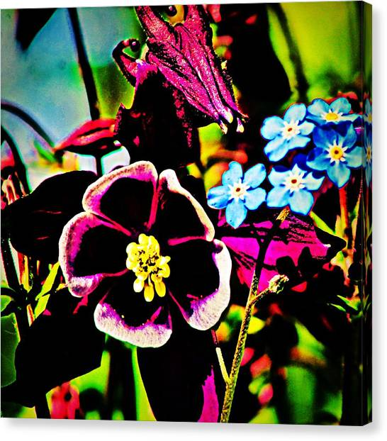 Canvas Print - Colombine And Forget Me Nots by Modern Art