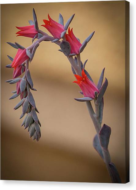 Color And Curve Canvas Print
