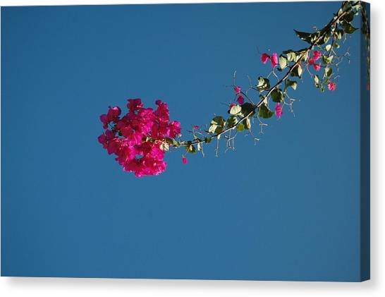 Color And Sky Canvas Print by Jean Booth