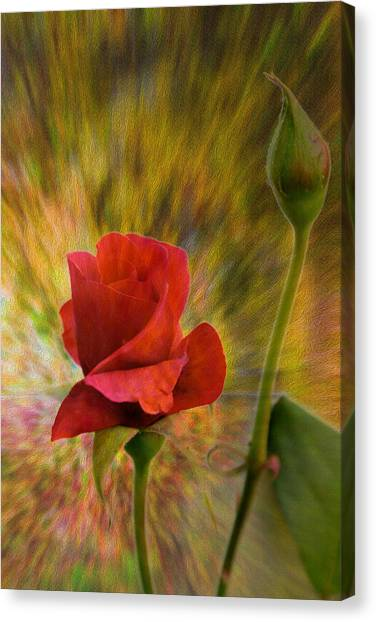 Color Explosion - Rose - Floral Canvas Print by Barry Jones