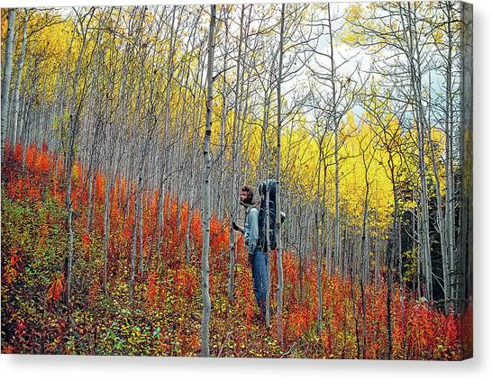 Color Fall Canvas Print
