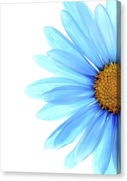 Daisy Canvas Print - Color Me Blue by Rebecca Cozart