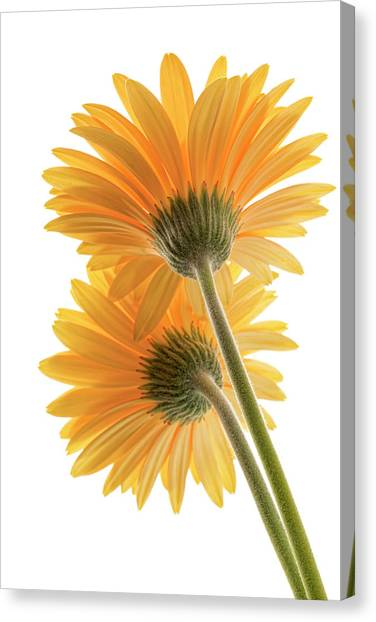Color Me Happy Canvas Print