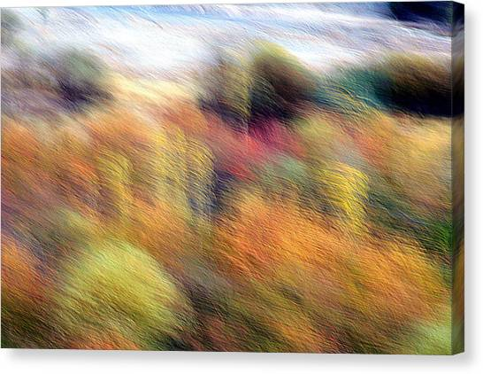 Color Play Canvas Print by Robert Shahbazi