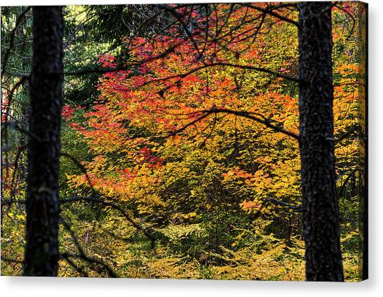 Cascade Mountain Range Fall Color Canvas Print