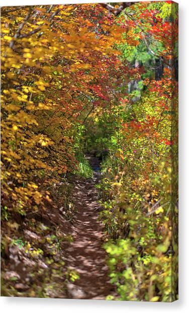 Cascade Mountain Range Color Vortex Canvas Print